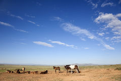 Mongolia Horse Stock Image