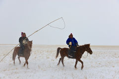 Mongolia horse and rider Royalty Free Stock Photography