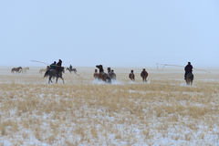 Mongolia horse and rider Royalty Free Stock Photo