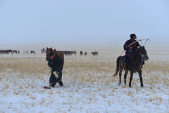 Mongolia horse and rider Royalty Free Stock Photos