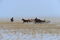 Mongolia horse and rider Royalty Free Stock Images