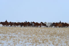 Mongolia horse and rider Royalty Free Stock Photos