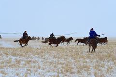 Mongolia horse and rider Stock Photography
