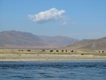 Mongolia landscape - Selenge river Stock Photo