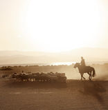 Mongolian boy drove herd of sheeps Stock Photo