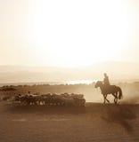 Mongolian boy drove herd of sheeps. 2 stock photo