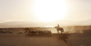 Mongolian boy drove herd of sheeps Royalty Free Stock Image