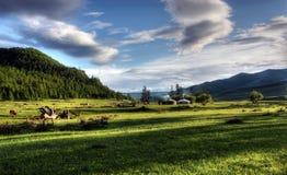 Mongolian dwelling. On the green plain of grass Stock Photos