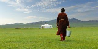 Mongolian farmer in the grassland of Mongolia. Mongolian farmer carrying bucket of milk after milking cow in the grassland of Mongolia stock photos