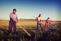 Mongolian Farmers Working Hard Agricultural Crop Concept Stock Photos