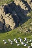 Mongolian gers Royalty Free Stock Photo