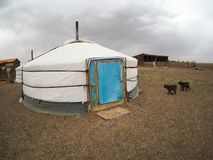 Mongolian gers or yurts in the Gobi desert - travel and tourism royalty free stock image