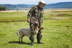 Mongolian herder catches a lamb Royalty Free Stock Image