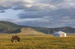 Mongolian horse in a landscape of northern mongolia Royalty Free Stock Images
