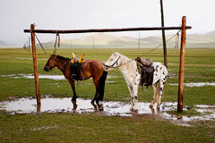 Mongolian horses. Two horses standing just a minute after rain in Mongolia royalty free stock photo