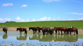 mongolian horses in vast grassland, mongolia Stock Photo