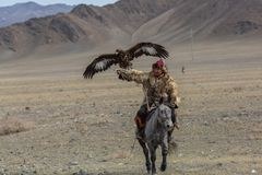 Mongolian Kazakh Eagle Hunter traditional clothing, holding a golden eagle on his arm Royalty Free Stock Images