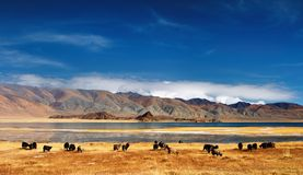 Mongolian landscape Stock Photography