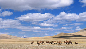 Mongolian landscape with camels Stock Photos