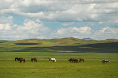 Mongolian landscape with horses and yurts Stock Photo