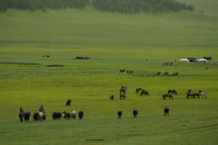 Mongolian landscape with horses and yurts Stock Photos