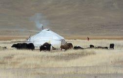 Mongolian Life 1 Royalty Free Stock Image