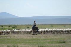 Mongolian man tends herd of sheep, circa Harhorin, Mongolia. Royalty Free Stock Photo