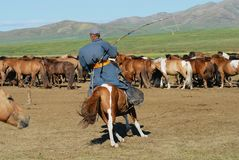 Mongolian man wearing traditional costume rides on horse back in a steppe in Kharkhorin, Mongolia. stock images