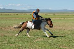Mongolian man wearing traditional costume rides wild horse in a steppe in Kharkhorin, Mongolia. royalty free stock photography