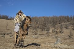 Mongolian man wearing a wolf skin jacket, riding his horse in a royalty free stock image