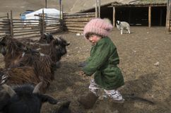 Mongolian nomad kid at their animal closure in a steppe of northern Mongolia. Hatgal, Mongolia, 3rd March 2018: mongolian kid in a steppe of northern Mongolia Stock Images