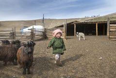 Mongolian nomad kid at their animal closure in a steppe of northern Mongolia. Hatgal, Mongolia, 3rd March 2018: mongolian kid in a steppe of northern Mongolia Royalty Free Stock Photography