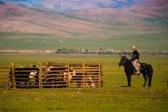 Mongolian shepherds with horse and Yaks Stock Photo