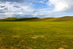 Mongolian Steppes. The vast grasslands of the Mongolian steppes Royalty Free Stock Photos