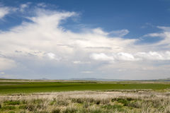Mongolian Steppes. The vast grasslands of the Mongolian steppes Stock Photo