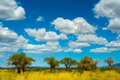 mongolian widok Zdjęcie Royalty Free