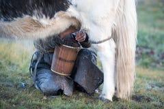 Mongolian woman milking a yak in northern Mongolia. Stock Photo