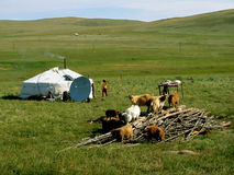 Mongolian yurt Royalty Free Stock Photo