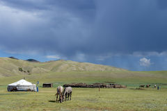 Mongolian yurt and horses Stock Photos