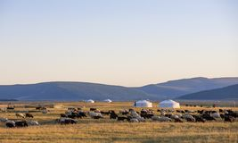 Mongolian yurt in a landscape on northern mongolia. Mongolian yurt, called ger,  in a landscape on northern mongolia Royalty Free Stock Photo