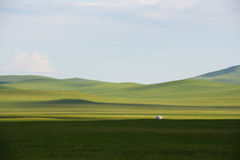 A Mongolian yurt and the prairie. A  mongolian yurt and herds on the prairie Stock Images