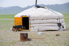 Mongolian yurta in steppe. Mongolian yurta with a dog in steppe stock image