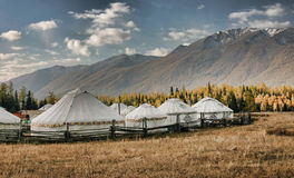 Mongolian Yurts By Kanas Lake Stock Photography