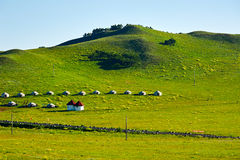 The mongolian yurts on the hillside Stock Images