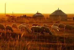 mongolianyurt Royaltyfri Fotografi
