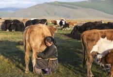Mongolische Frau, die eine Kuh milk Lizenzfreies Stockfoto