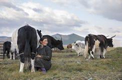 Mongolische Frau, die eine Kuh milk Stockfoto