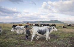 Mongolische Frau, die eine Kuh milk Lizenzfreies Stockbild