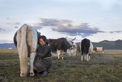 Mongolische Frau, die eine Kuh milk Stockfotografie
