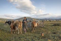 Mongolische Frau, die ihre Kühe an einem Morgen milk Stockbild
